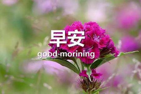 甜甜的早安心语,句句甜到心窝里!
